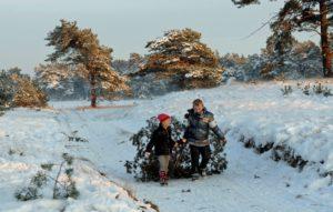 echte kerstboom zagen in NP De Hoge Veluwe