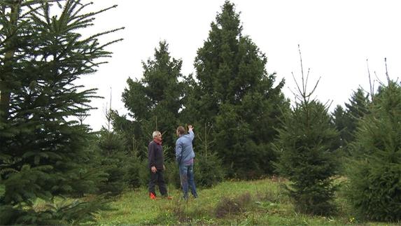 kerstboom prijs