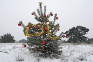 Zelf kerstboom zagen op de Hoge Veluwe
